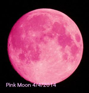 pink Moona