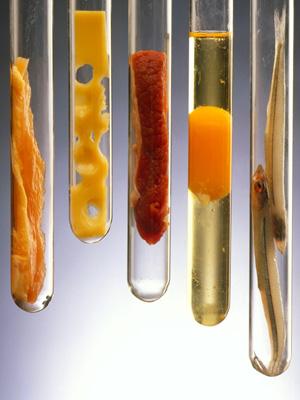 20080118_food